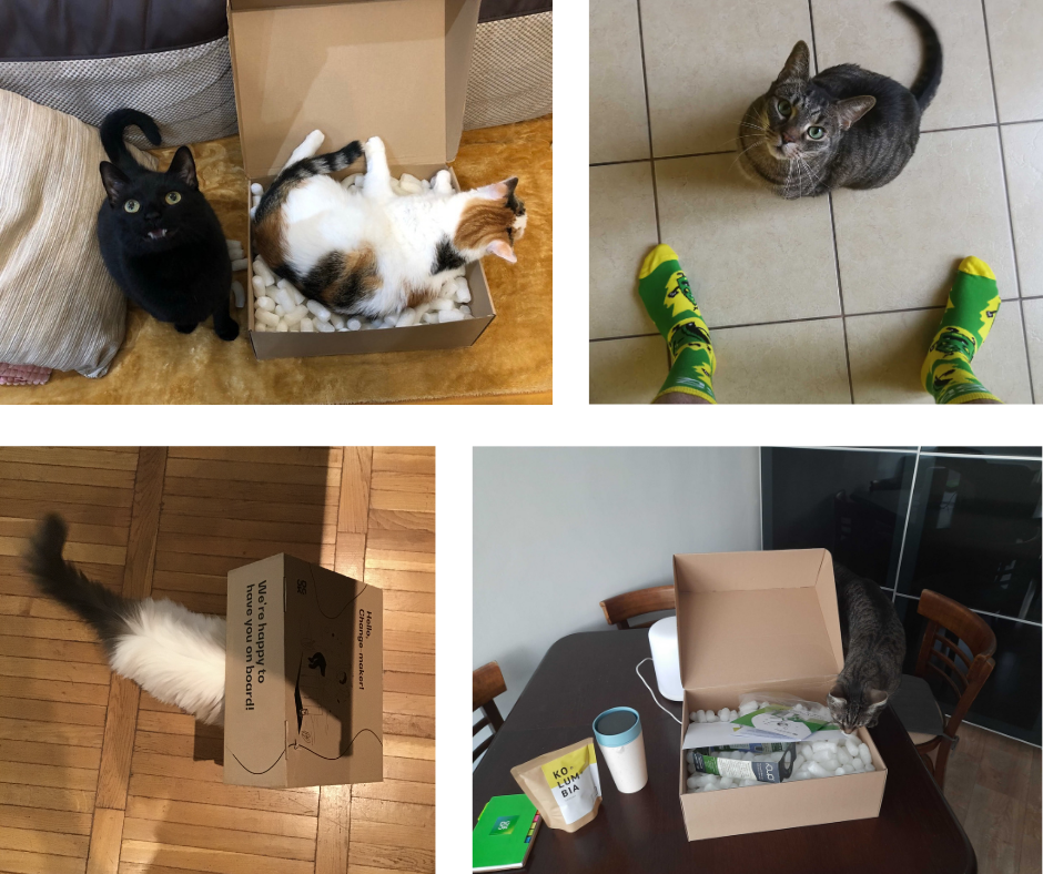 cats enjoy welcome packs from DO OK